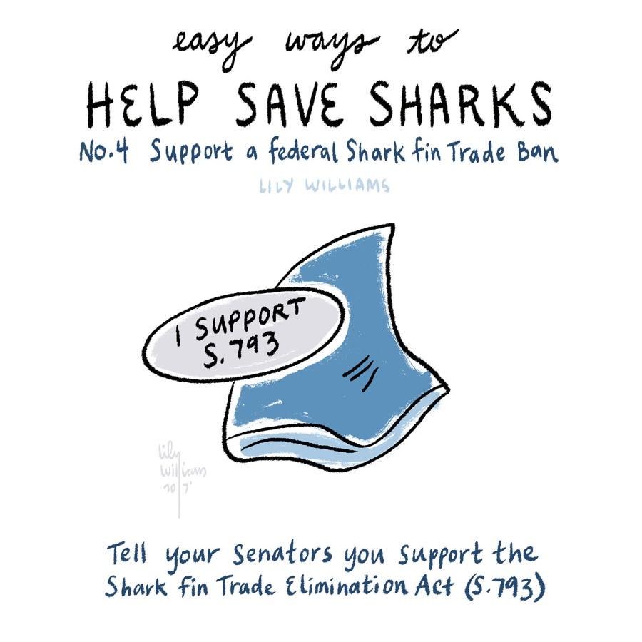 SharkWeek2017_5004