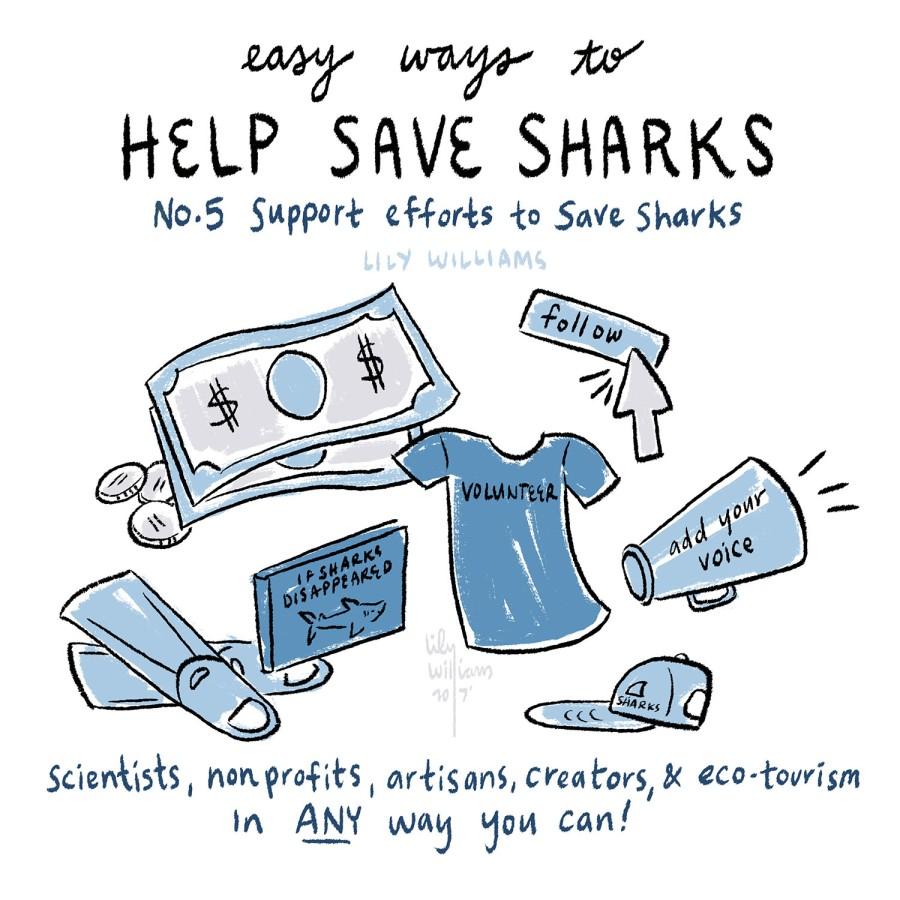 SharkWeek2017_5005